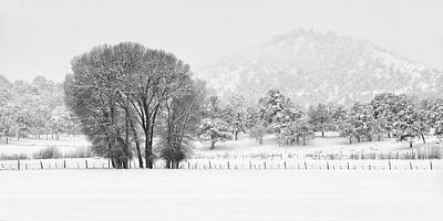 Photograph - Winter Pasture In Black And White by Denise Bush
