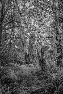 Photograph - Winter Path Bw #h1 by Leif Sohlman