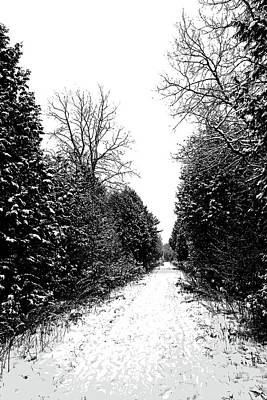 Photograph - Winter Path by Debbie Oppermann