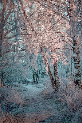 Photograph - Winter Path #h1 by Leif Sohlman