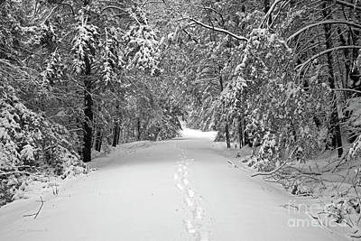 Photograph - Winter Path by John Stephens