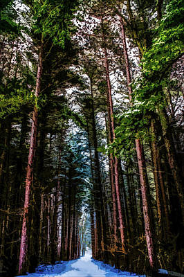 Photograph - Winter Path Through The Pines by Michael Arend
