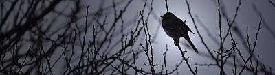 Dave Taylor Photograph - Winter Perch by Dave Taylor