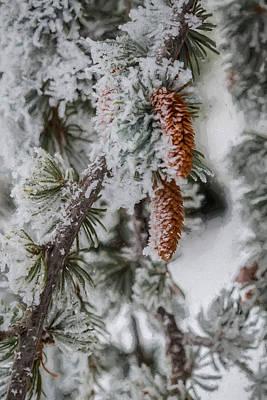 Photograph - Winter Pine Cones by Lou Novick