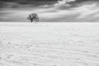 Photograph - Winter by Plamen Petkov