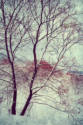 Photograph - Winter Poem by Jenny Rainbow