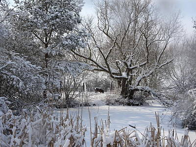 Photograph - Winter Pond by Susan Baker