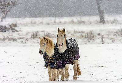 Photograph - Winter Pony by Cliff Norton
