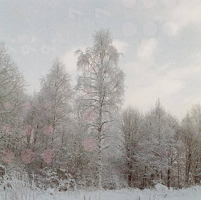 Photograph - Winter Prelude II by Olivier De Rycke