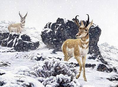 Painting - Winter Pronghorns by Brian Durfee