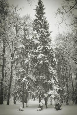 Photograph - Winter Quiet. Chernihiv, 2013. by Andriy Maykovskyi
