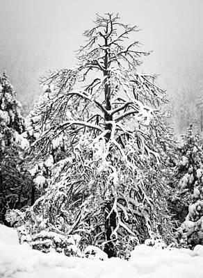 Photograph - Winter by Racheal Christian