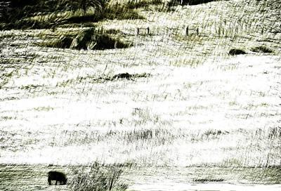 Photograph - Winter Range by Lenore Senior