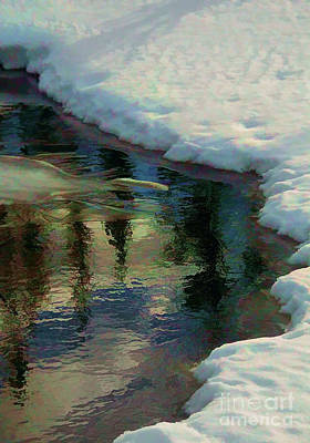 Photograph - Winter Reflection by Roland Stanke