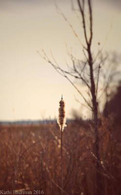 Photograph - Winter Remnants by Kathi Isserman