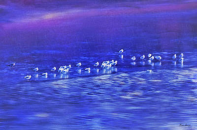 Photograph - Winter River Birds by Anna Louise