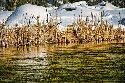 Photograph - Winter River Reeds - Yellowstone by Stuart Litoff