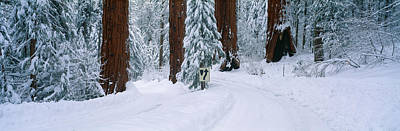 Fir Trees Photograph - Winter Road Into Sequoia National Park by Panoramic Images