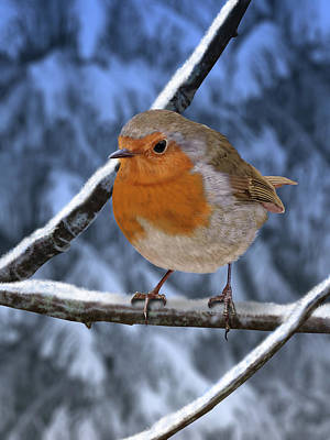 Digital Art - Winter Robin by Nigel Follett