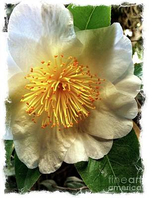 Photograph - Winter Rose by S Forte Designs