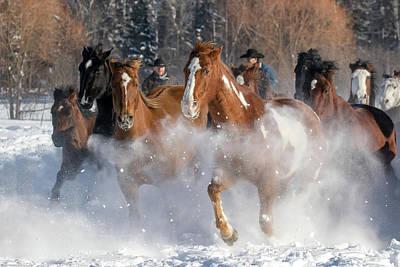 Photograph - Winter Run by Jack Bell