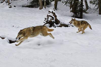 Photograph - Winter Run by Steve McKinzie
