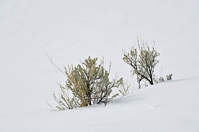 Photograph - Winter Sagebrush In Yellowstone by Bruce Gourley