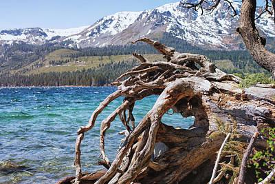 Winter Scene - Fallen Leaf Lake - California Art Print by Bruce Friedman