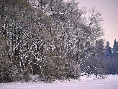 Photograph - Winter Scene by Jouko Lehto