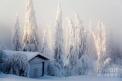 Winter Scene Art Print by Kati Molin
