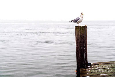 Photograph - Winter Seagull On Long Beach Island by John Rizzuto