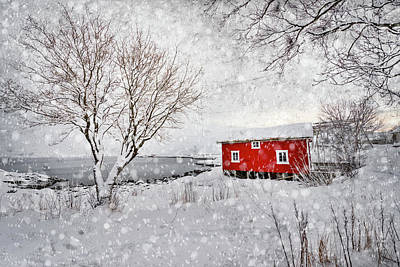 Photograph - Winter Secret by Philippe Sainte-Laudy