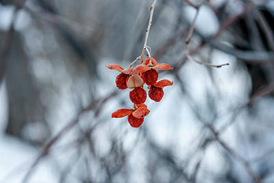 Photograph - Winter Seeds by Daniel Murphy