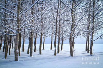 Photograph - Winter Sentinels by Idaho Scenic Images Linda Lantzy