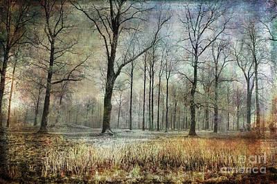 Photograph - Winter Serenity by Randi Grace Nilsberg