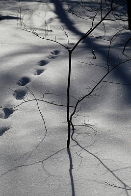 Photograph - Winter Shadows 2018 7 by Mary Bedy