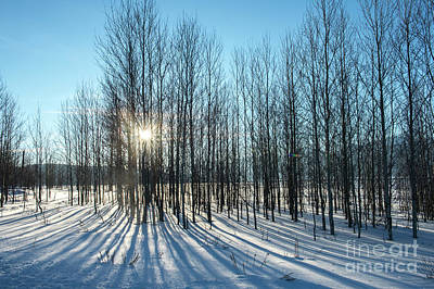 Photograph - Winter Shadows - Grand Teton National Park by Sandra Bronstein