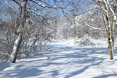 Photograph - Winter Shadows by Scott Kingery