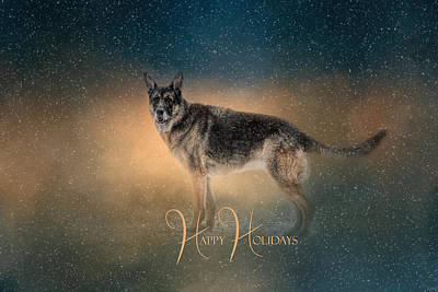 Dog In Snow Photograph - Winter Shepherd - Happy Holidays by Jai Johnson