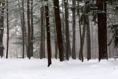 Photograph - Winter Silence by Suzanne DeGeorge