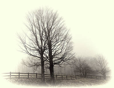 Photograph - Winter Silhouette by Grace Dillon