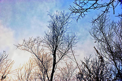 Photograph - Winter Sky by Gina O'Brien