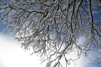Photograph - Winter Sky With Branches by Aggy Duveen