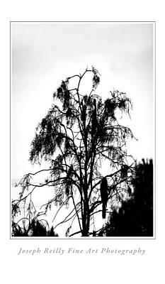 Winter Sky Wood Storks Art Print by Joseph Reilly