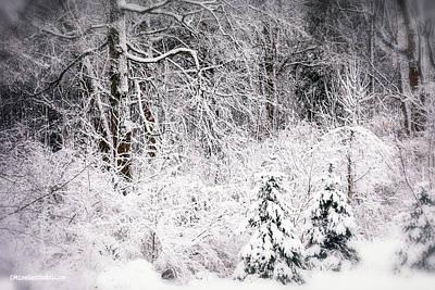 Photograph - Winter Snow Storm 2018 by LeeAnn McLaneGoetz McLaneGoetzStudioLLCcom