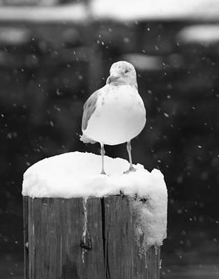 Winter Snows Original by Doug Mills