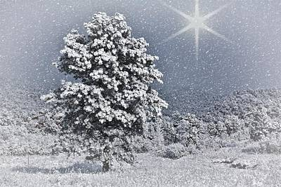 Kindred Spirits Photograph - Winter Solitude 2 by Diane Alexander
