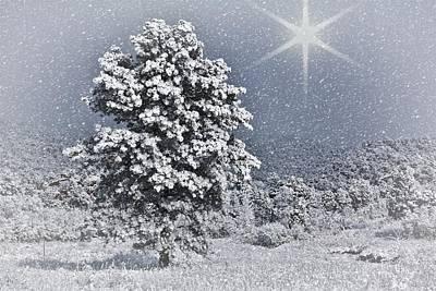 Photograph - Winter Solitude 2 by Diane Alexander