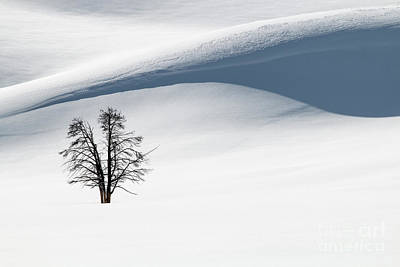 Photograph - Winter Solitude by Sonya Lang