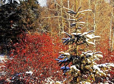 Photograph - Winter Solitude by Will Borden